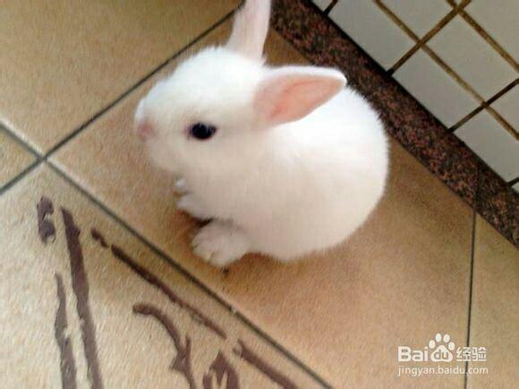 壁纸 动物 兔子 580_434