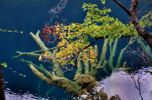 壁纸 海底 海底世界 海洋馆 水族馆 580_384