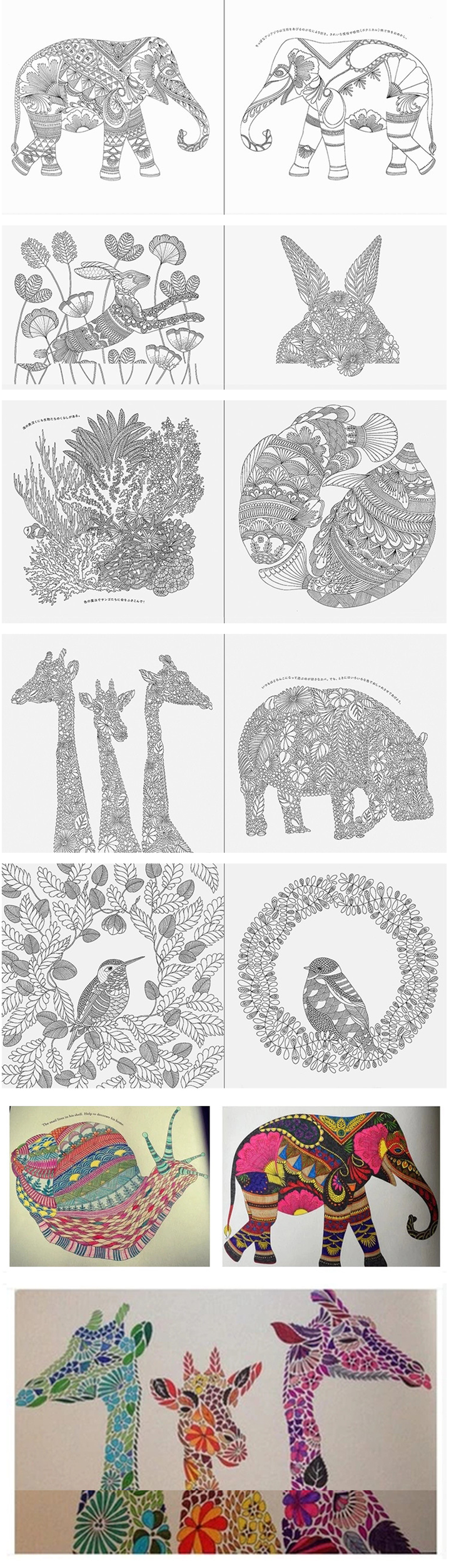 版动物王国animal kingdom填色书