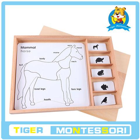 【虎天天蒙氏正品】蒙特梭利教具三步卡片动物拼图嵌板三段卡
