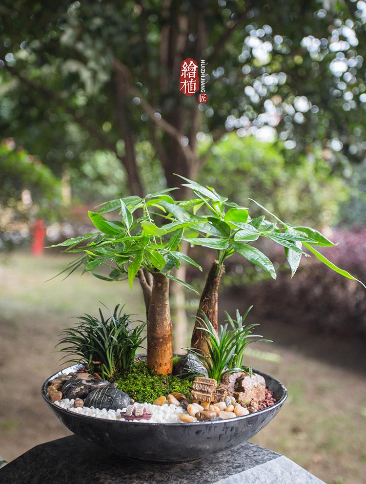 红盆栽发财树微信头像