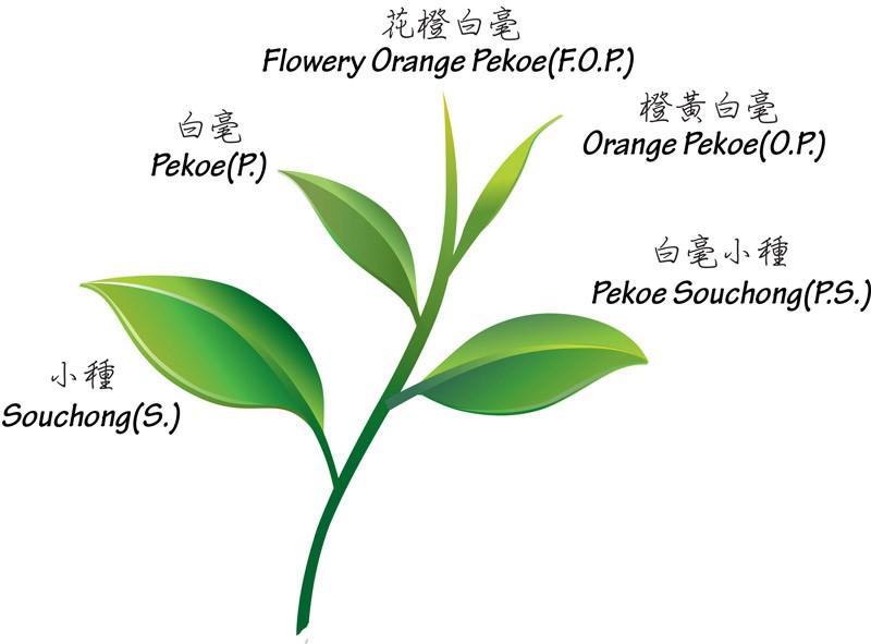 欧式淡绿色植物